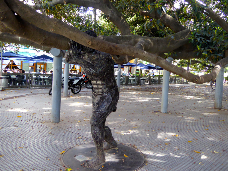 A statue joins the functional supports that hold up the spreading branches of Ficus macrophylla.