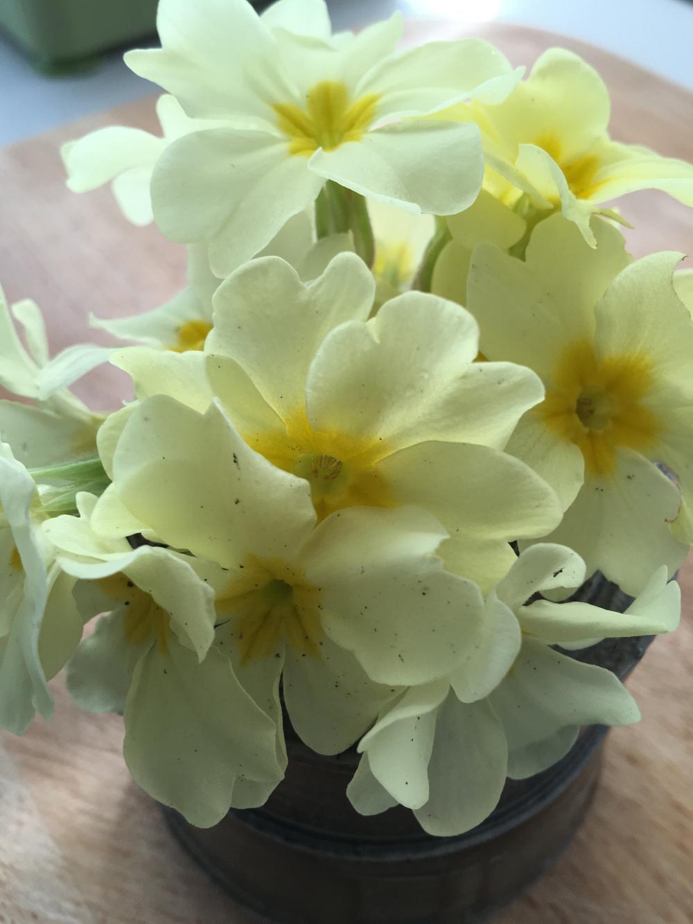 The Garden Post Barbara Segall Wild Garlic
