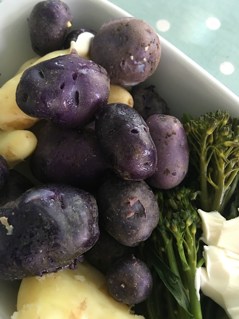 Just harvested and ready for eating, purple skins and purple flesh even when cooked, potato Vitellote.