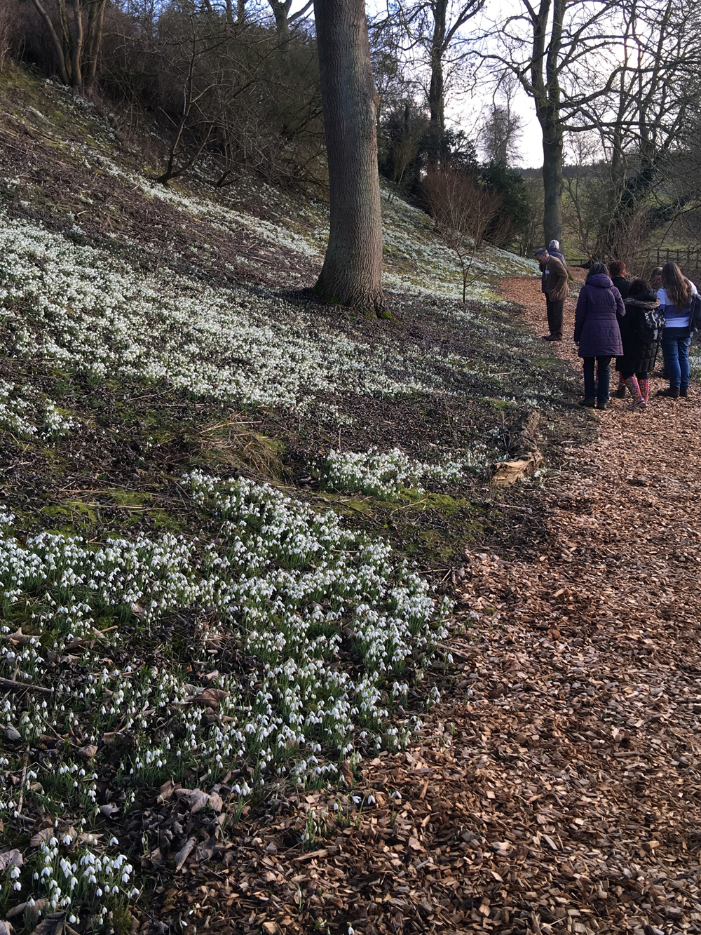 Easton: the snowdrop walk
