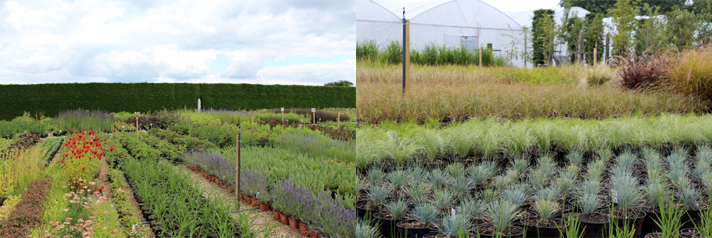 grasses and perennials at hortus loci