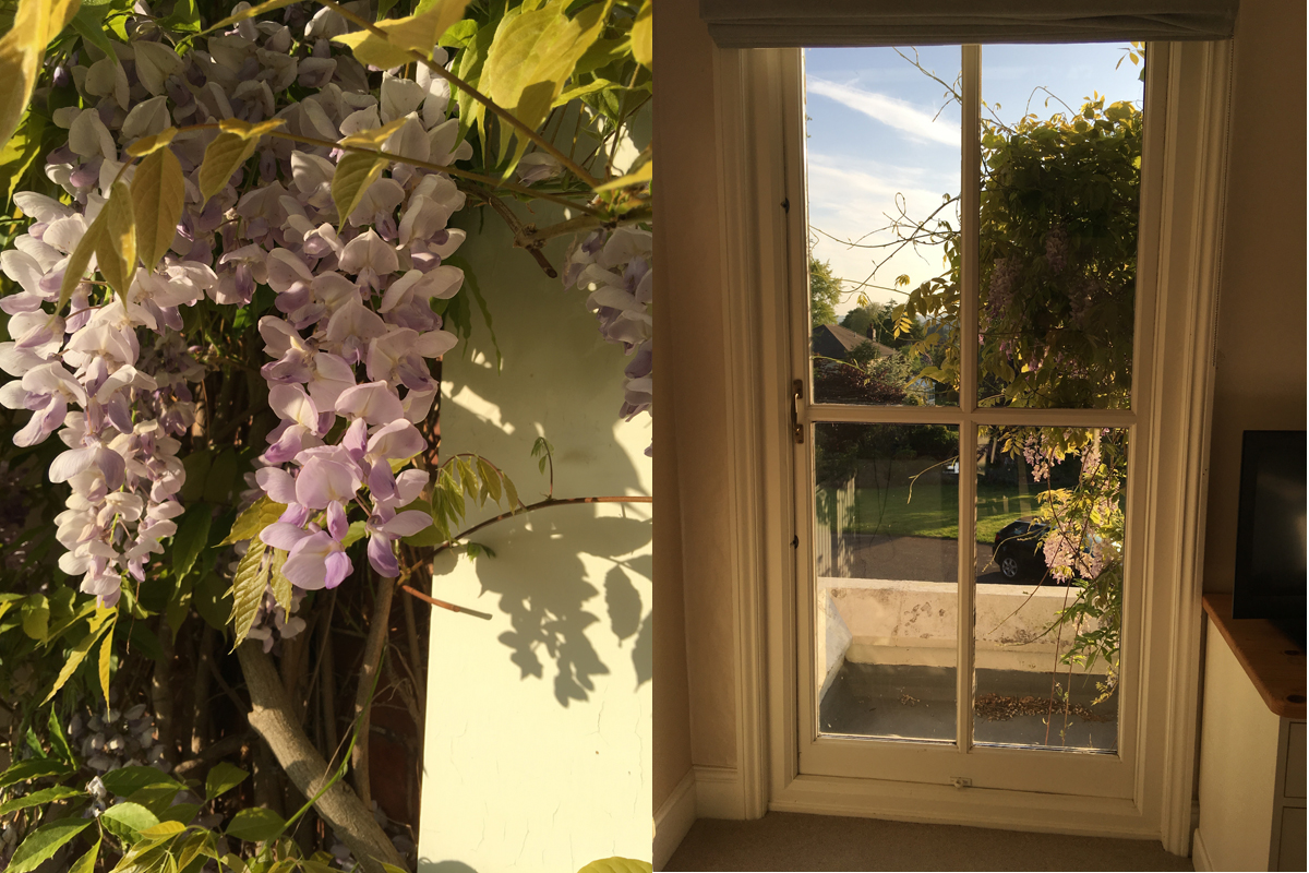 wisteria at the bnb