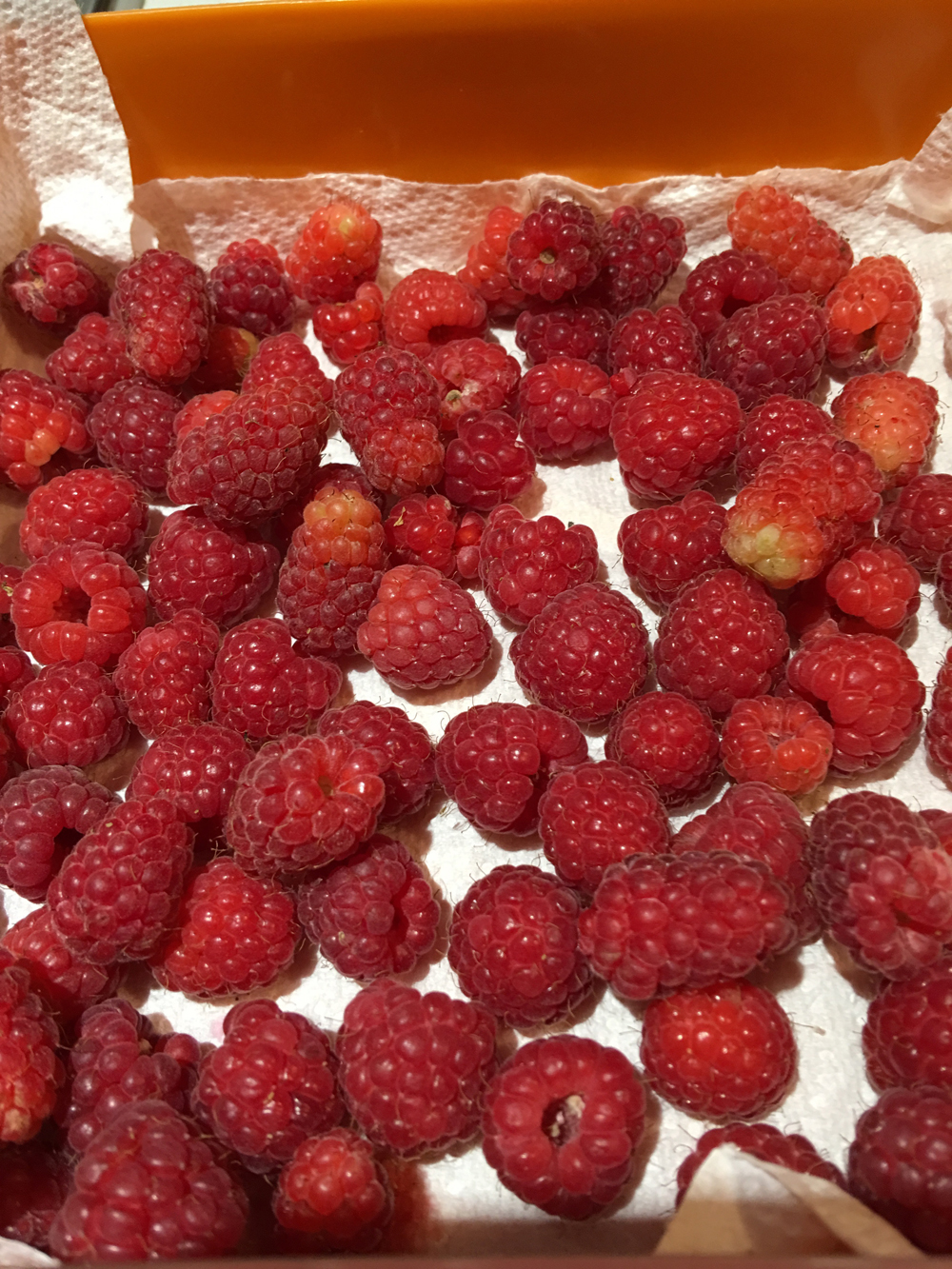 lubera raspberries