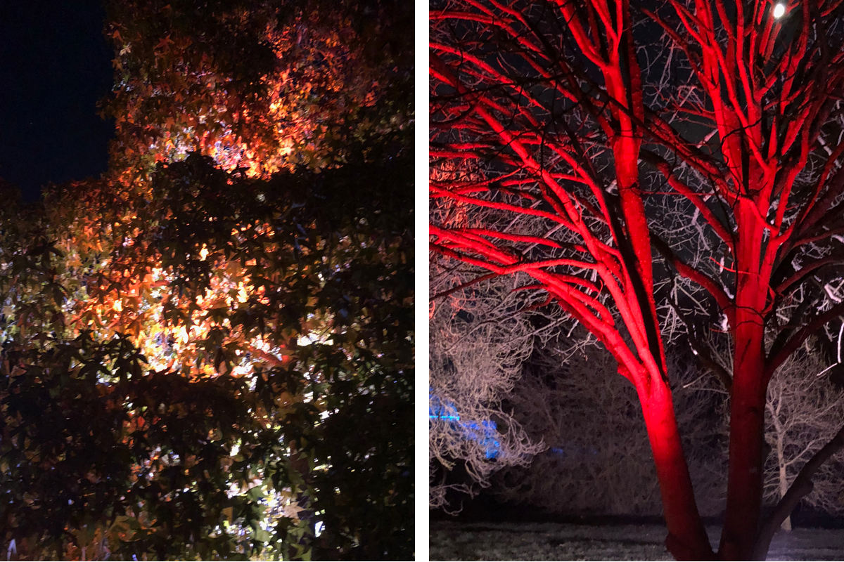 Trees lit up for Christmas at Kew Gardens