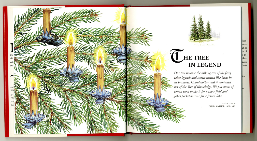 Christmas Tree book by Barbara Segall published Ebury Press