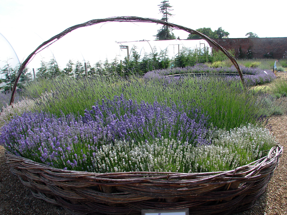 lavender baskets at Downderry