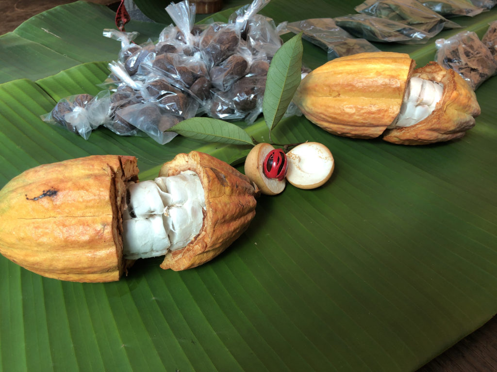 Cacao pods and nutmeg fruits