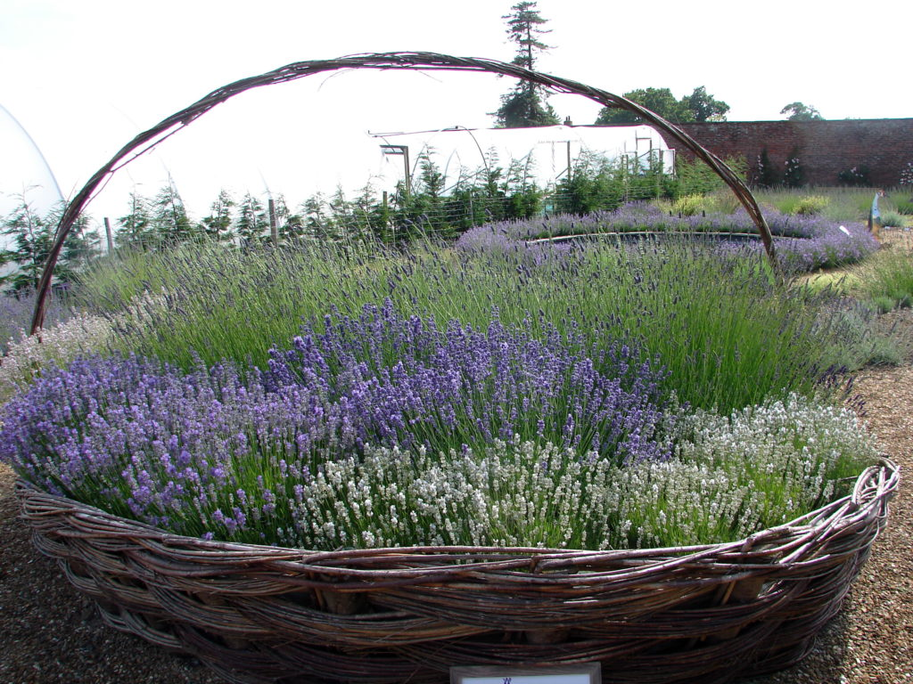 basket of lavender flowers