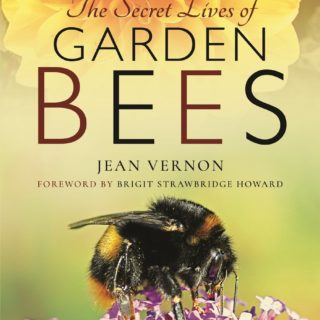 book cover for secret lives of garden bees by jean vernon